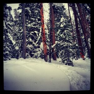 Deep powder in the trees at Keystone.